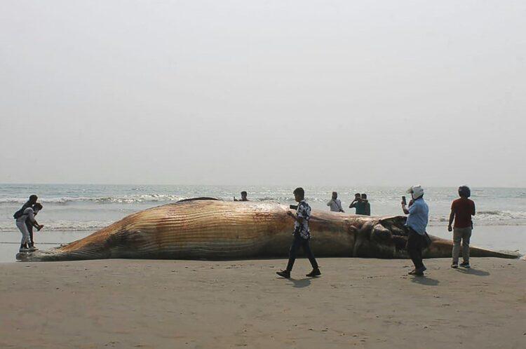 2 ölü balina iki günde Bangladeş sahilini yıkadı