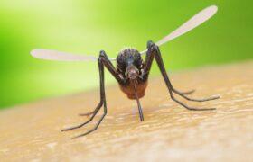 sivrisinekleri